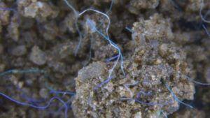 Polyacrylfasern (Mikroplastik) im Erdreich. Bild: Anderson Abel de Souza Machado