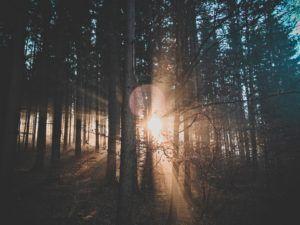 Bild von einem Wald