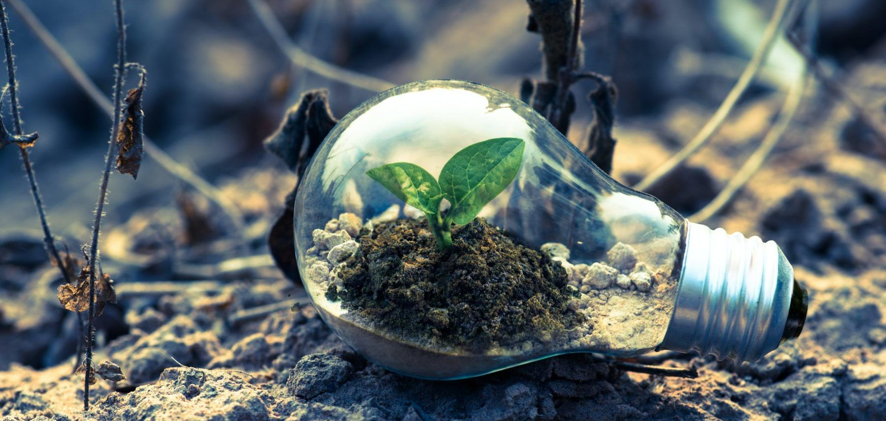 Eine Glühbirne die auf den Boden liegt gefüllt mit Erde und einer grünen Pflanze - suggeriert Nachhaltigkeit. Ökologischer Fußabdruck von Produkten
